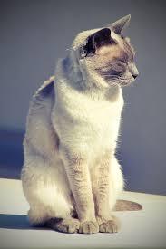 Min kat